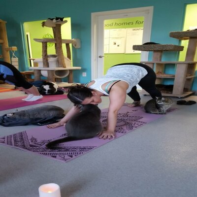 Yoga With Cats 1
