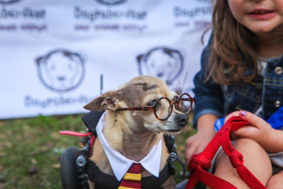 Dogtoberfest 2017 Harry Potter